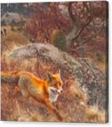Fox With Hounds Canvas Print