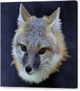Foxburst Canvas Print