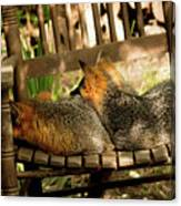 Foxes In A Chair Canvas Print