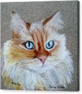 Foxey Canvas Print