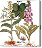 Foxglove And Herb Paris Canvas Print