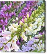 Foxglove Card Canvas Print