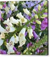 Foxglove Fancy Canvas Print