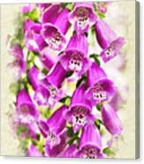 Foxglove Flowers Blank Note Card Canvas Print