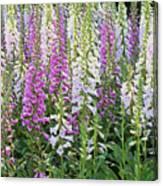 Foxglove Garden - Digital Art Canvas Print