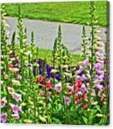 Foxglove In Front Of Conservatory In Golden Gate Park In San Francisco, California  Canvas Print
