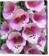 Foxglove Plant - Pink Bell Flowers. Macro Canvas Print