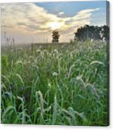 Foxtail Grasses In Glacial Park Canvas Print