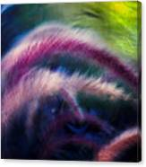 Foxtails In Shadows Canvas Print