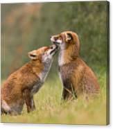 Foxy Love- Kiss Canvas Print