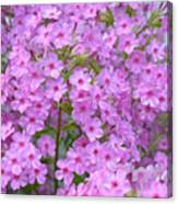 Fragrant Phlox Canvas Print