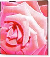 Fragrant Rose Canvas Print