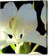 Fragrant White Ginger Canvas Print