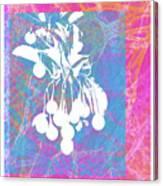 Framed Cherries Canvas Print