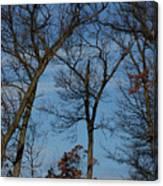 Framed In Oak - 1 Canvas Print