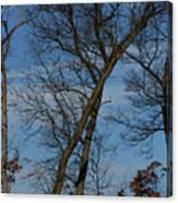 Framed In Oak - 2 Canvas Print
