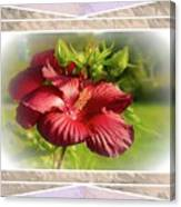 Framed Red Hibiscus Canvas Print