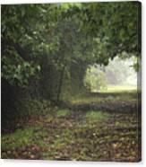 Framed Summer Woods Canvas Print