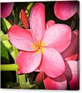 Frangipani Blossom Canvas Print