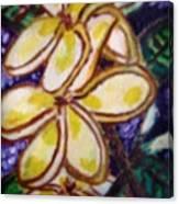 Frangipani In The Tropics  Series 1 Canvas Print
