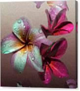 Frangipani With Overlay Canvas Print