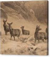 Franz Xaver Von Pausinger Rotwild Im Winter Canvas Print