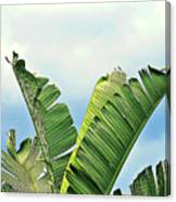 Frayed Palm Fronds Against Blue Sky Canvas Print