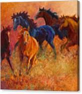 Free Range - Wild Horses Canvas Print