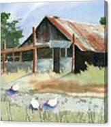 Free Range Chickens Canvas Print
