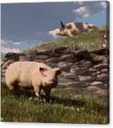 Free Range Pigs Canvas Print