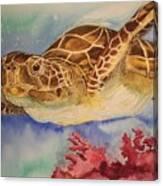 Free To Swim Canvas Print