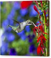 Freedom Hummingbird Canvas Print