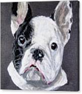 French Bulldog Close Up Canvas Print