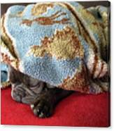 French Bulldog Naps Under A Blanket-1 Canvas Print