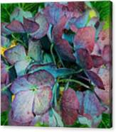 French Hydrangea Rainbow Canvas Print
