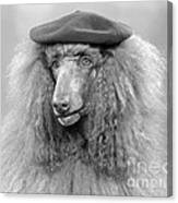 French Poodle Wearing Beret, C.1970s Canvas Print