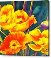 French Poppies Canvas Print