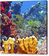 French Reef 1 Canvas Print