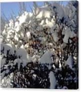 Fresc Snow Canvas Print