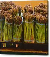 fresh Asparagus Canvas Print