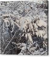 Fresh Coat Of Snow Canvas Print