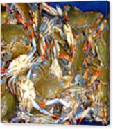 Fresh Crab In Market Canvas Print