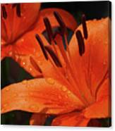 Fresh Floral Delight Canvas Print
