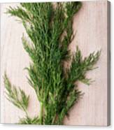 Fresh Green Dill On Wooden Plank Canvas Print