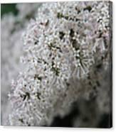 Fresh Lilac Perfume Canvas Print