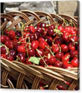 Fresh Picked Cherries In A Wicker Basket In Dolnje Cerovo In The Canvas Print