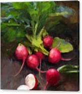 Fresh Radishes Canvas Print
