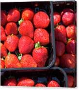 Fresh Ripe Strawberries In Plastic Boxes Canvas Print