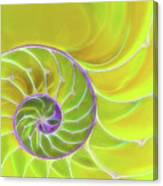 Fresh Spiral Canvas Print