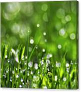 Fresh Spring Morning Dew Canvas Print